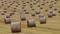 hay-small